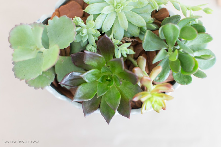 08-decoracao-arranjo-suculentas-plantas