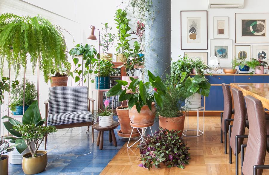 por que ter plantas em casa
