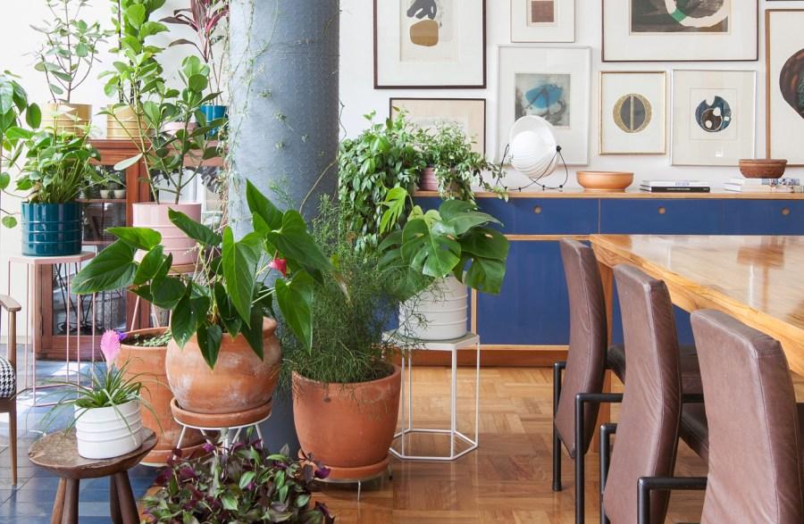 Plantas, flores e dicas para ter uma vida mais verde