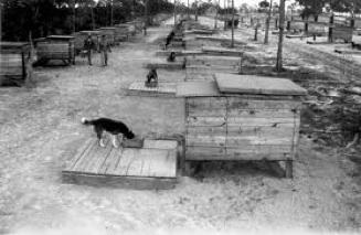 Perros Cat Island