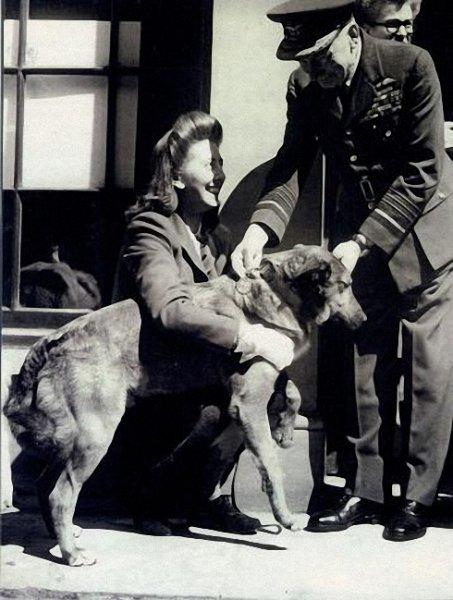 Bing el día que fue condecorado junto a su dueña Betty Fetch