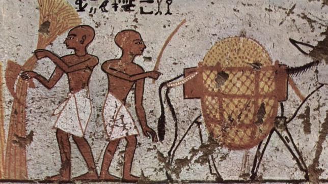 Cerveza Egipto