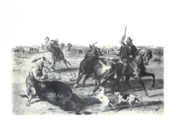 Campesinos faenando ganado vacuno