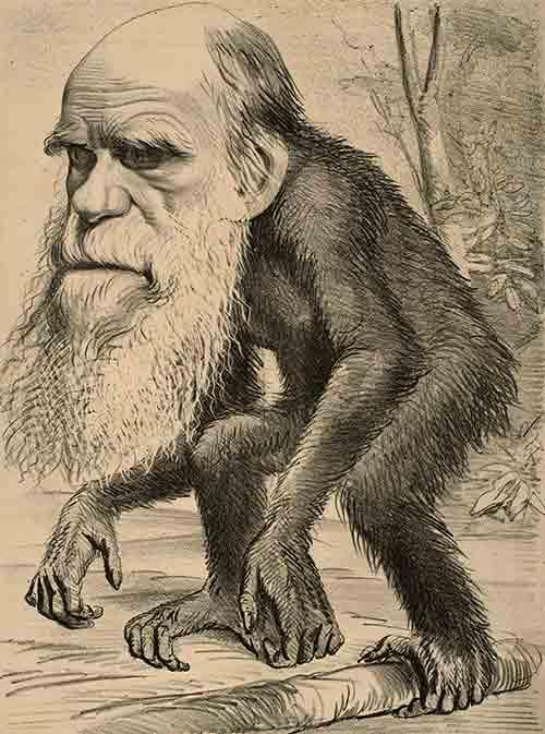 Vestigios en nuestro cuerpo de la evolución de las especies... que no sirven para nada