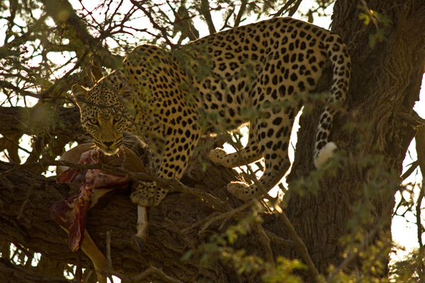 As Manchas do Leopardo (3/6)