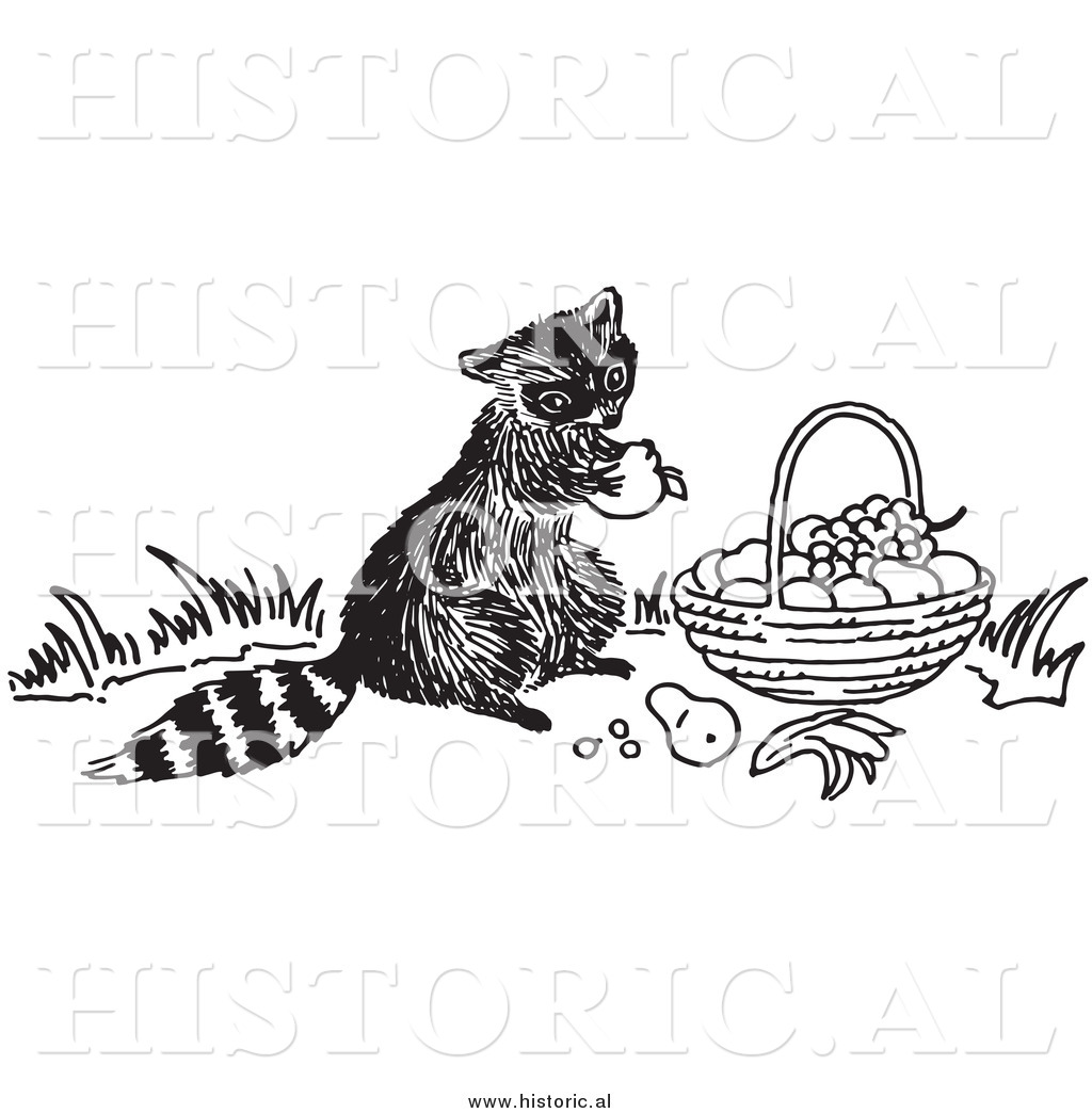 Clipart Of A Hungry Raccoon Eating Fruit Out Of Someone S
