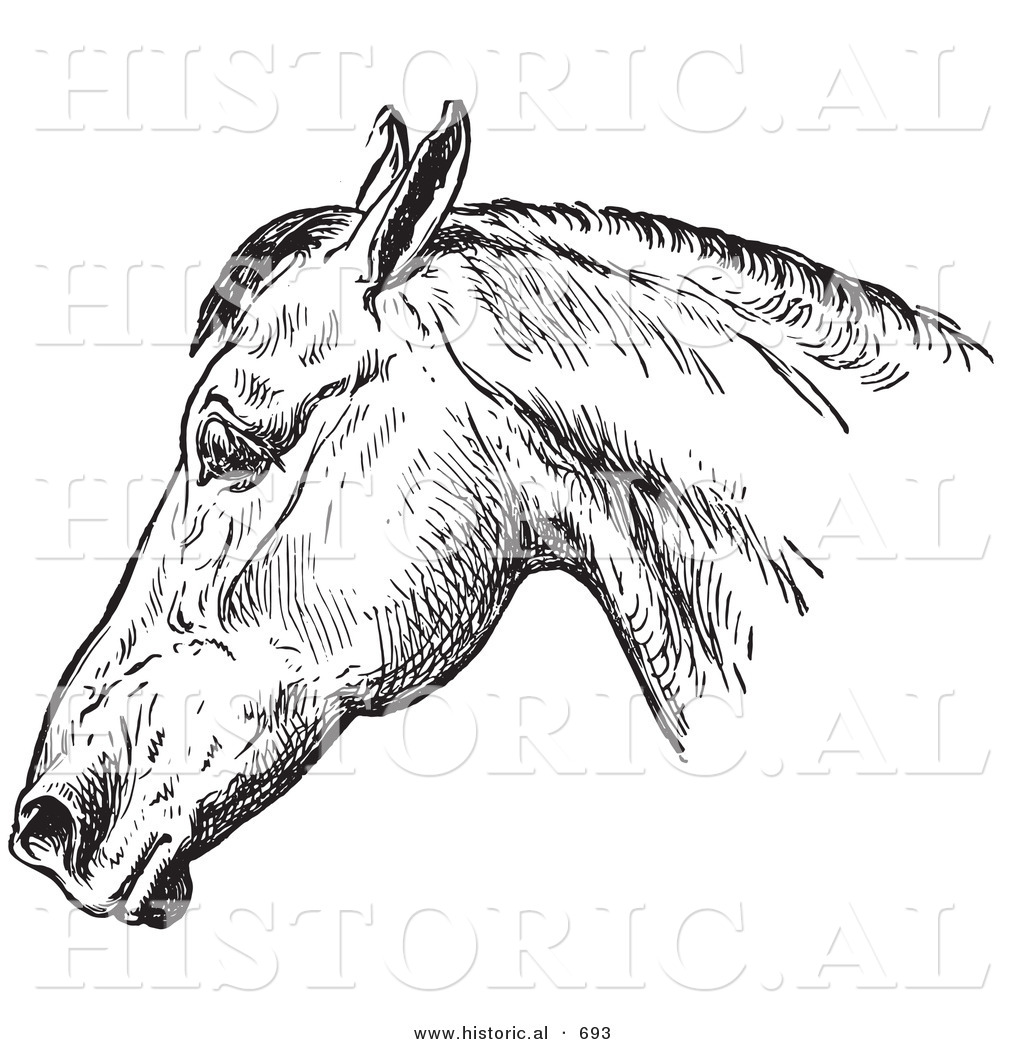 Historical Vector Illustration Of A Horse S Anatomy