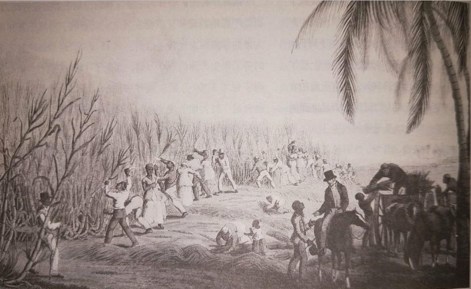 美洲甘蔗園