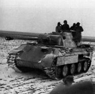 Panther in winter.