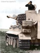 Tiger 1 on the look out.