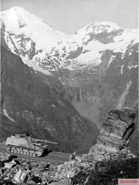 Nashorn on a mountain road.