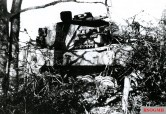 2nd photo of Tiger 334.