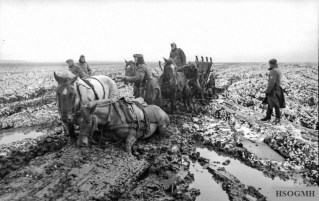 German horses stuck in Rasputitsa.