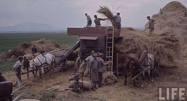 Agricultura romaneasca in anul 1964