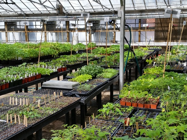 Seedlings and plants in a greenhouse, ready for planting