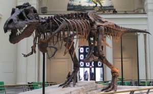 Sue, the most complete fossil skeleton of a Tyrannosaurus Rex specimen ever found.