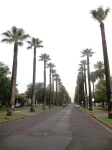 Roosevelt Districts Old Palm Trees