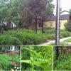 south park green main