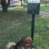 New dog poop boxes have signs!