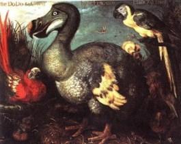 Oude afbeelding van een dodo