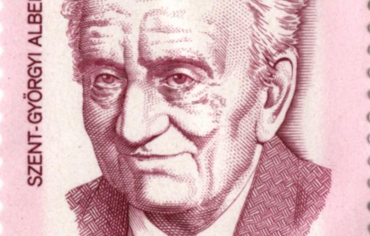 Albert Szent-Györgyi (1893-1986) - Hongaarse arts en Nobelprijswinnaar