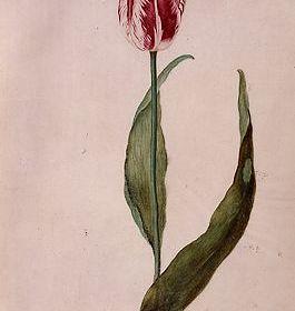 De Brabantsson - Judith Leyster (Foto: Frans Hals Museum)