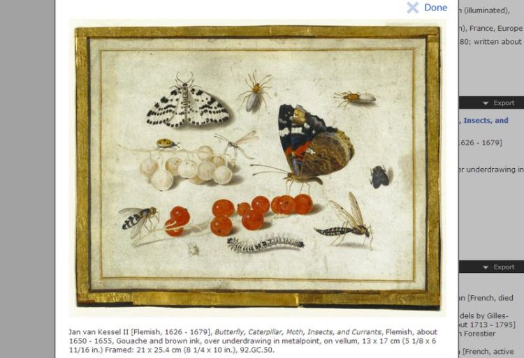 Afbeelding van Jan van Kessel II (ca. 1650) gratis te downloaden via de website van het Getty Museum