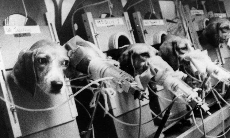 Rokende beagles in het laboratorium van Oscar Auerbach