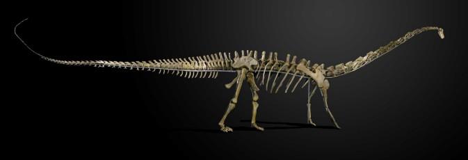 Diplodocus longus - Foto: Summers Place Auction