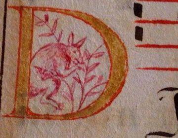 De afbeelding van een kangoeroe in het eeuwenoude boekje