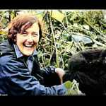 Dian Fossey (Still YouTube)