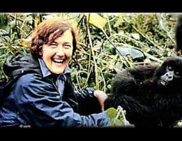 Dian Fossey (Still YouTube)