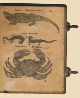 Herbarum Icones Vivae (Museum Boerhaave)