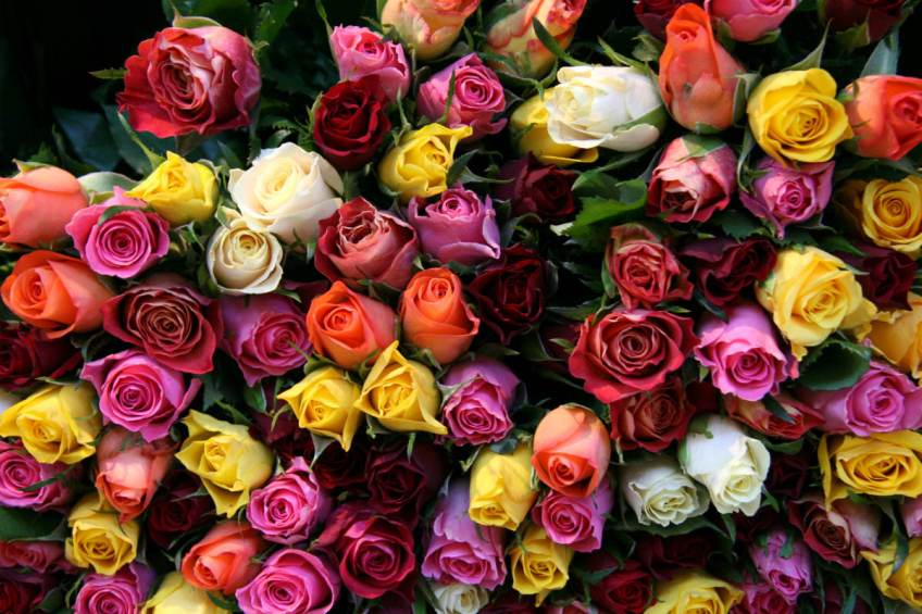 Bloemen zijn nog altijd populair als Valentijnsdag-presentje (stck.xchng)