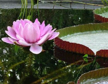 Hortus Botanicus in Amsterdam - cc