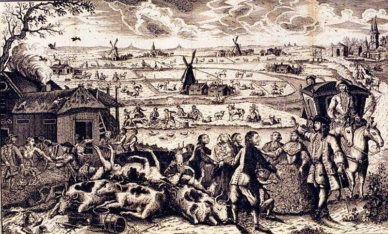 Runderpestuitbraak in Nederland, 18e eeuw -  Runderpest of veepest is een virusziekte die ziekteverwekkend is voor onder andere rundvee, zeboes en waterbuffels. Ook varkens, geiten en schapen zijn, zij het in mindere mate, vatbaar voor het runderpestvirus. Mensen zijn niet vatbaar.