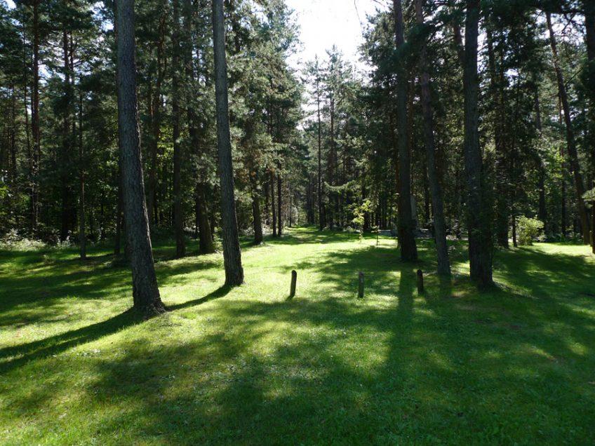 Bos bij Ponar