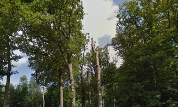 Bos rond Apeldoorn, bij het Aardhuis (Google Street View)