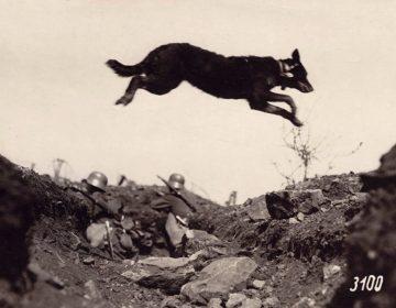 Hond op het slagveld van de Eerste Wereldoorlog