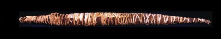 Mummie van een krokodil - Collectie en foto Rijksmuseum van Oudheden