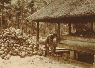 Ontbolsteren van kokosnoten op onderneming Soengei Rampah in Deli (KITLV)