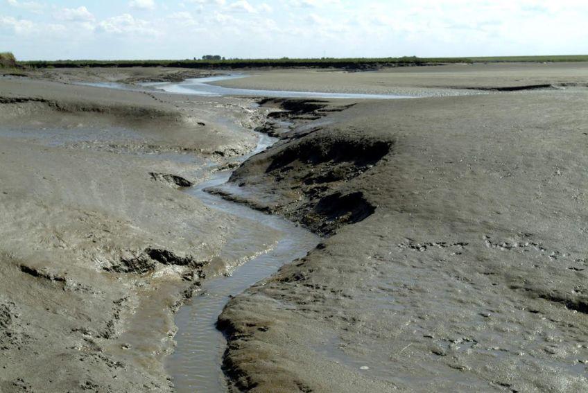 Aangeslibd land in Zeeland, bijna gereed voor inpoldering. (Foto: Rijkswaterstaat Zeeland)