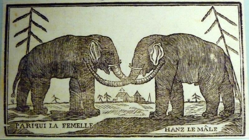 De olifanten Hans en Parkie (dickvanderlugt.nl)