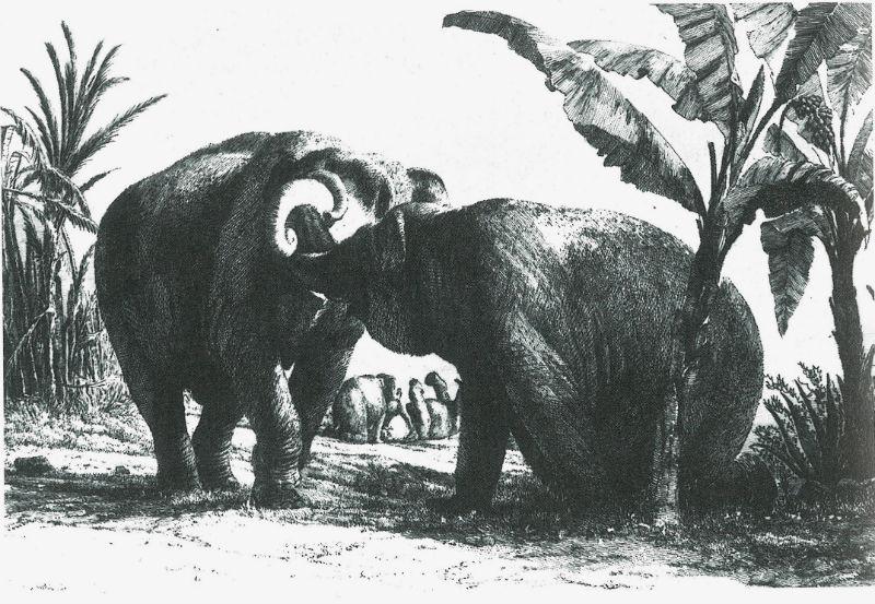 Hans en Parkie, twee olifanten voor stadhouder Willem V