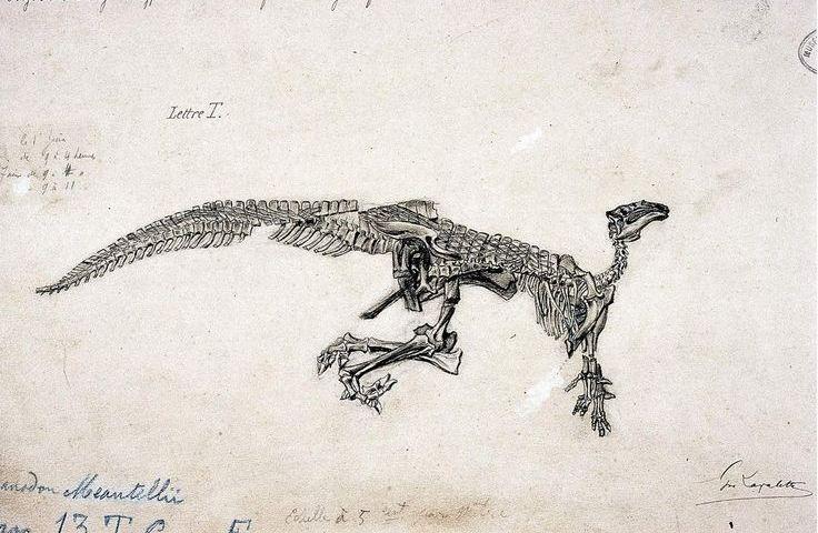 """Tekening door Gustave Lavalette van Mantellisaurus atherfieldensis (juli 1882),, zoals het skelet aangetroffen werd in de """"Wealdiaanse"""" kleisteen van de Cran du Midi te Bernissart. (wiki)"""