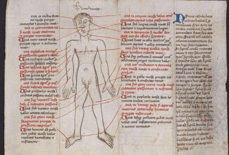 Aderlatingsman in het manuscript (British Library)