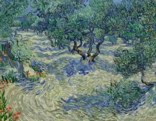 Olijfbomen - Vincent van Gogh