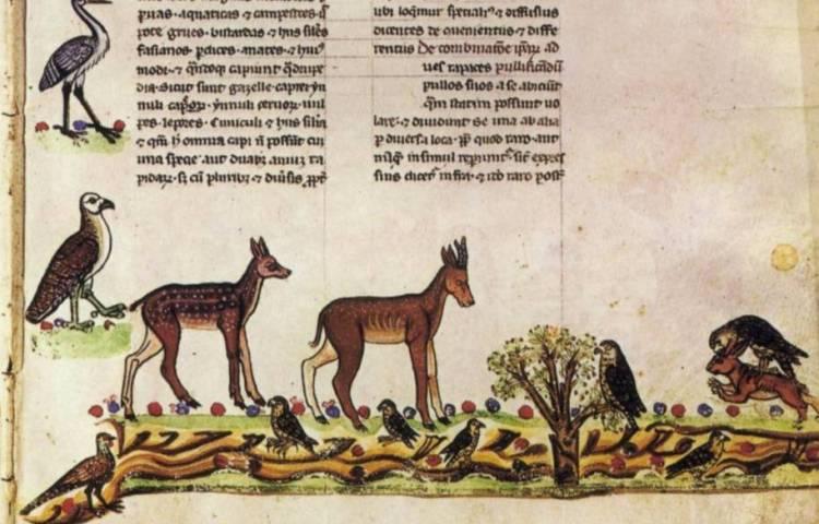 Fragment uit het Valkenboek van keizer Frederik II