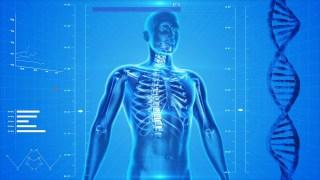 """""""Een rib uit mijn lijf"""" - Menselijk skelet met ribbenkast (cc - Pixabay)"""