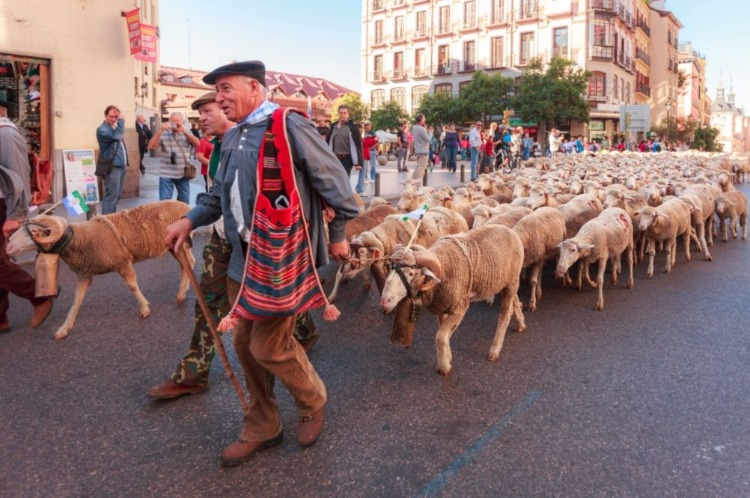 Schapen in Madrid, 2003 (CC BY-SA 3.0 - Barcex - wiki)